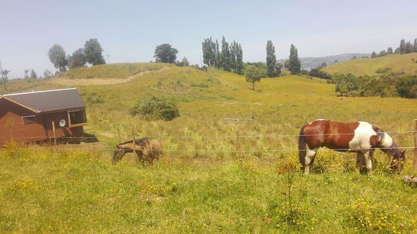 Arriendo de Cabaña rustica - Castro