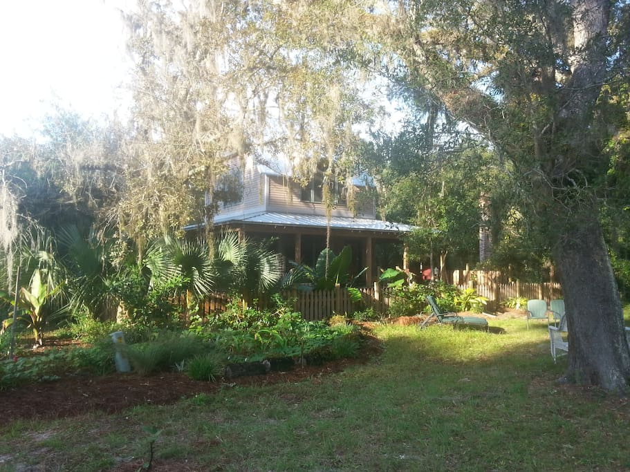 seven huge live oaks spill spanish moss into the view from the front porch