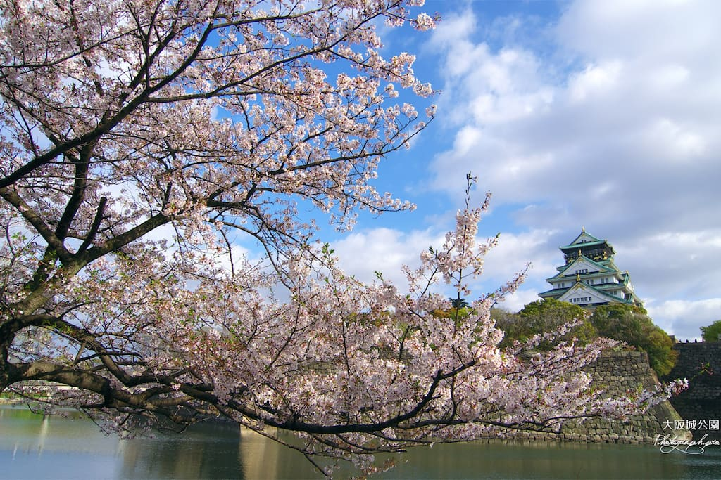Sakura season, Osaka castle and river from your room. AMAZING view!!!!!X)*