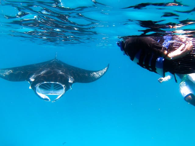 Manta Retreat at Dharavandhoo