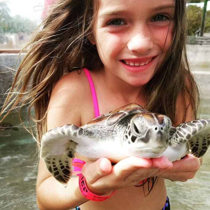 Interact with the turtles at the Turtle Farm
