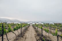 Enjoy the view, and a calm walk through the vineyards. Depending on the season, the vineyards are asleep in winter, waking up in spring or in full bloom during summer.