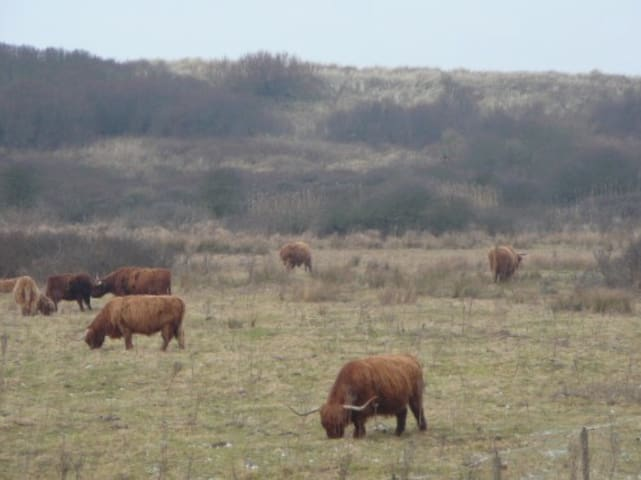 Scottish Highlanders right behind the dunes