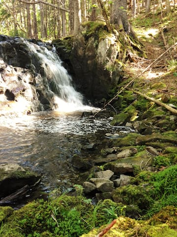 Follow the trail to the brook and its waterfalls, all the way to the ocean