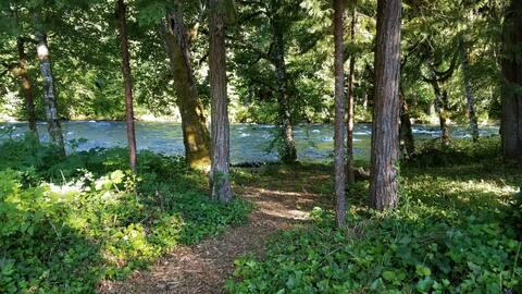 Riverfront Sanctuary - Log Cabin on Mckenzie River