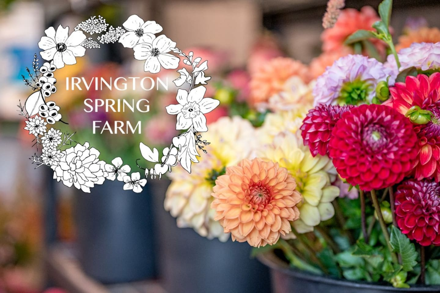 Welcome to the flower farm! Irvington Spring Farm is located in beautiful Lynchburg, VA.