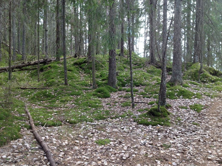 Endless possibilities for hiking in the neighbourhood