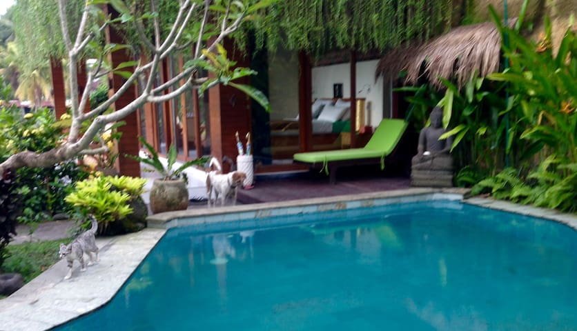 Pool, Ricefields, Organic Garden, Bali Dogs