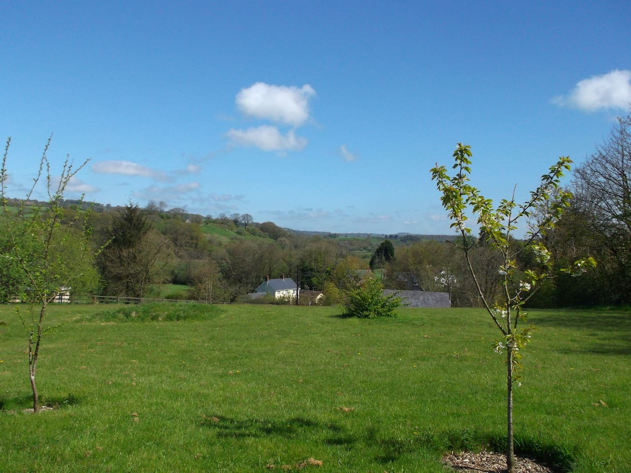 Our orchard view