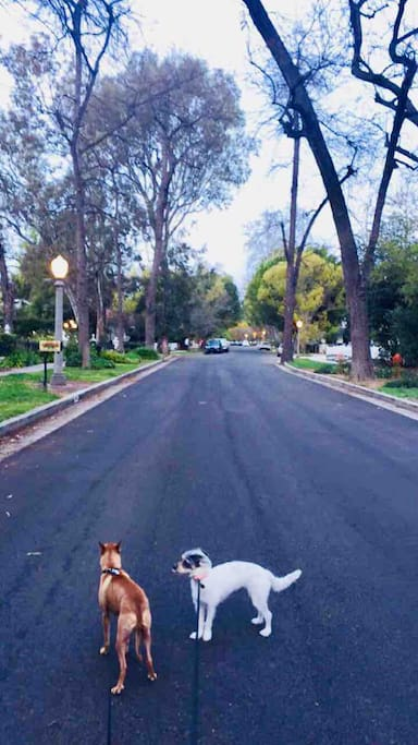 My Beautiful street. This is during winter...every other season is just stunning. Very dog friendly, kid friendly over all a safe family neighborhood. Two Blocks from Ventura Blvd.
