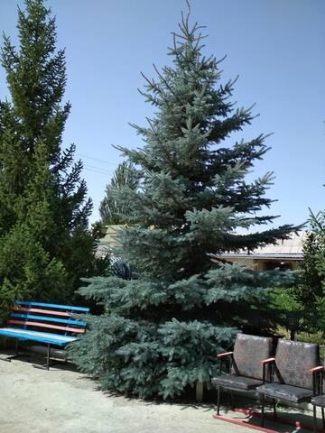 """Гостевой дом """"Тынар"""""""