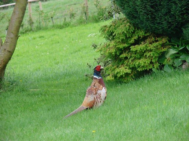 Bird's Nest Caravan - Congleton - Hytte