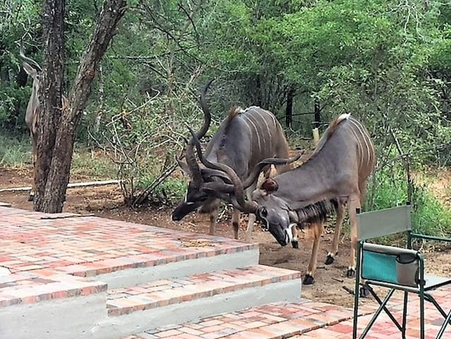 kudu by the pool