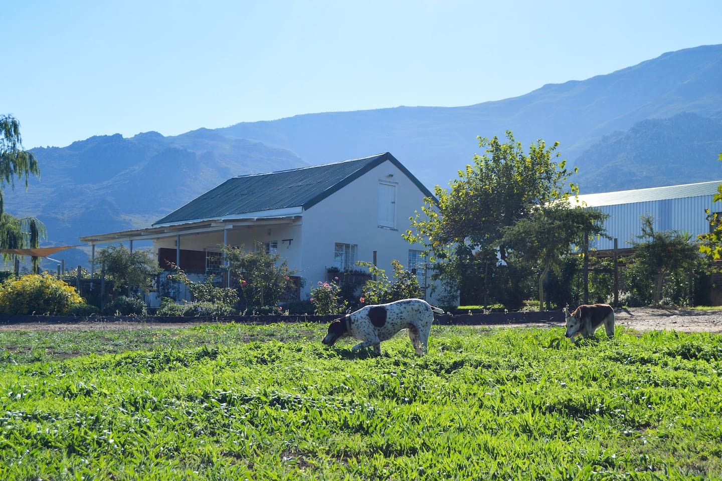 Pet Friendly De Rust Willow Cottage Accommodation in Villiersdorp for the most convenient working Farm Stay Accommodation in Cape Town