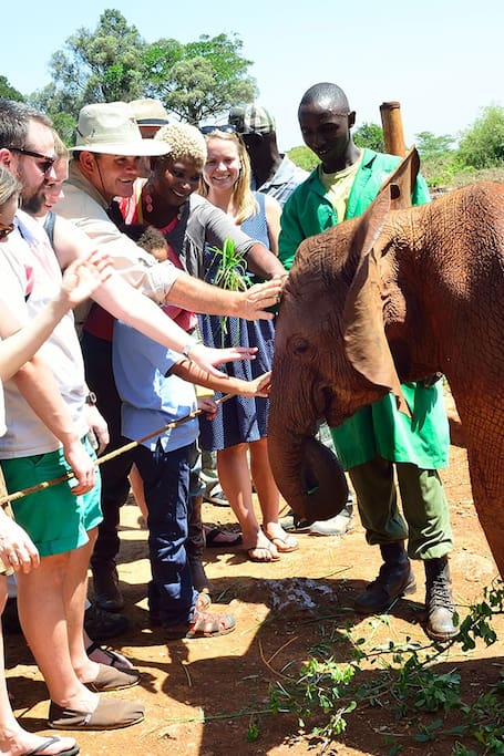 Feeling the Elephants at Sheldrick