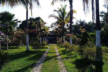 Tierralinda, Room CCIII