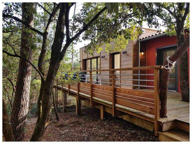 Jolie maison dans les pins & proche lac de Lacanau