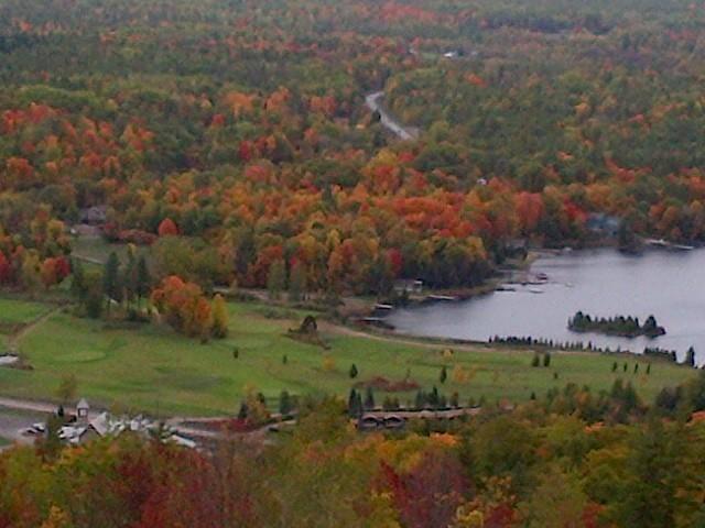 Beautiful foliage in the fall