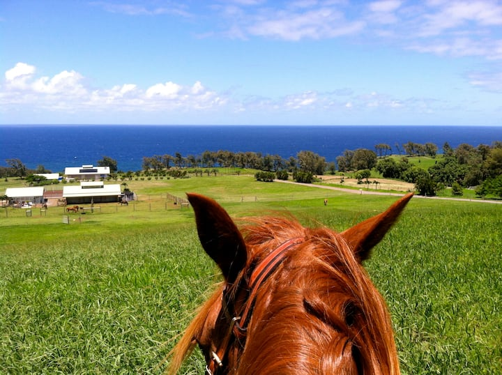 Hawaii Oceanfront Nature Retreat