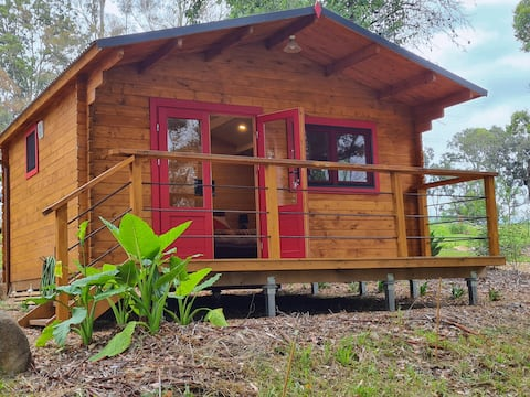 The Lily Pond Cabin, relaxing & nestled in nature.