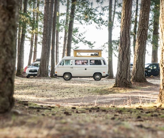 VW WESTALIA CAMPERVAN RENTAL ️Vancouver Island
