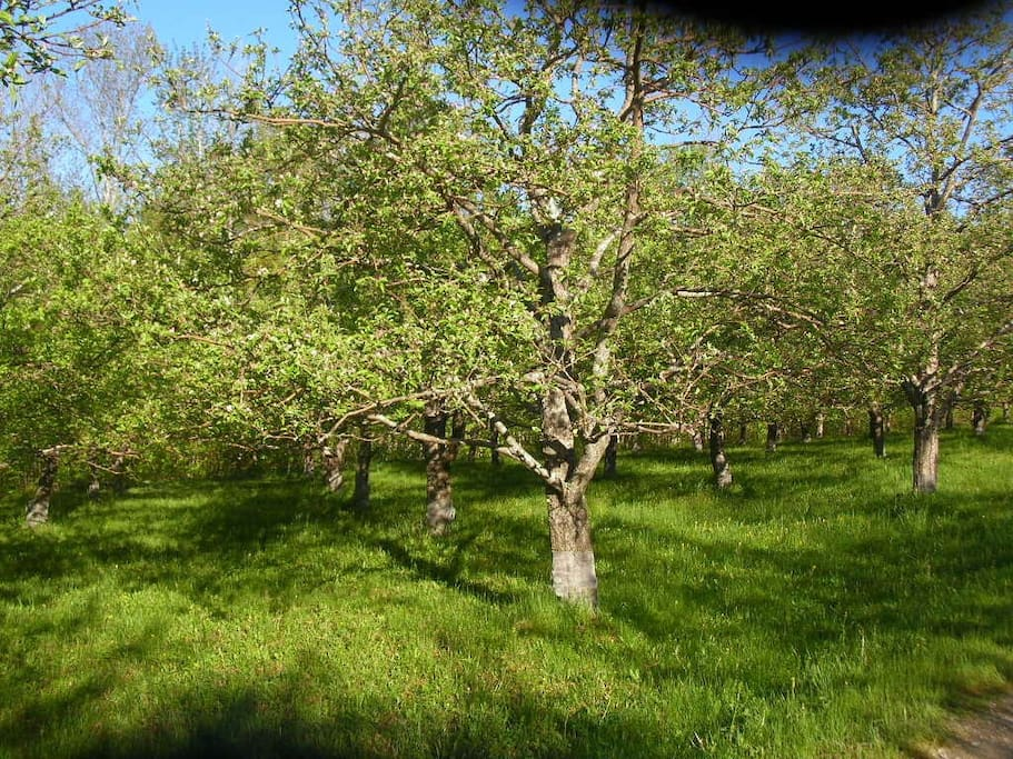 Bob planted all 550 apple trees.