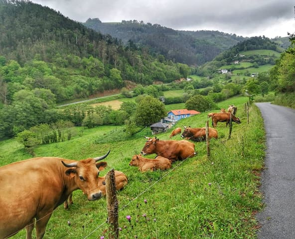 typical Asturian countryside!