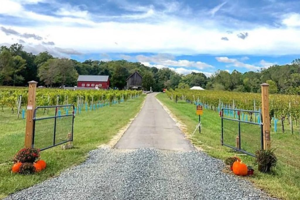 Great Frogs Winery - 1.3 miles