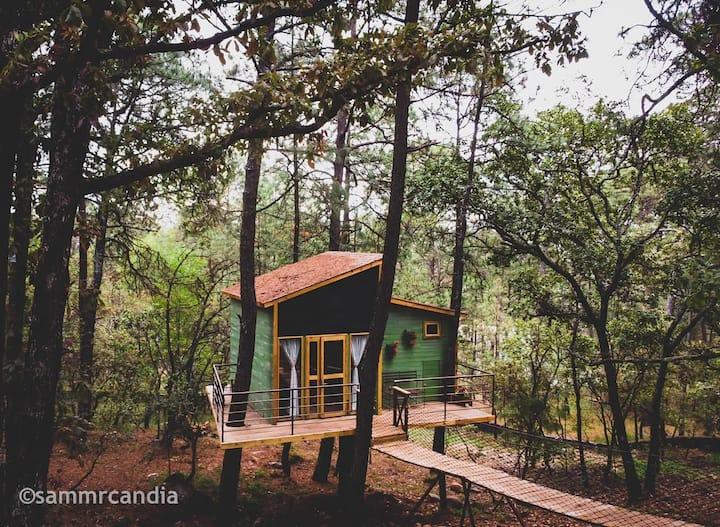 Pinochueco casa del árbol verde