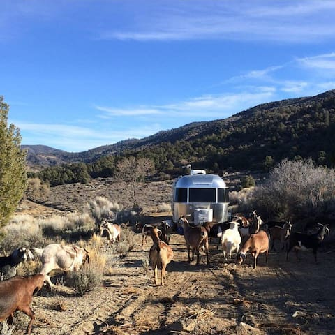 Airstream at Angeles Crest Creamery Wrightwood