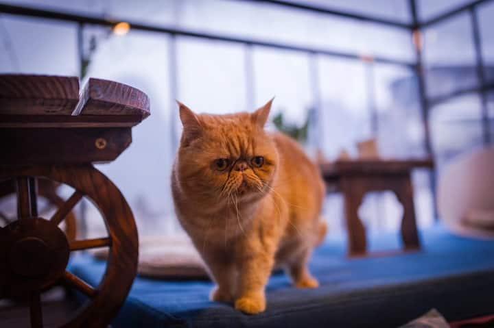 可爱的加菲猫饼干和它的小伙伴暹罗猫夹心一起陪你住西街北欧风大床房 主人说房间卖出去了才有零食吃 呜呜