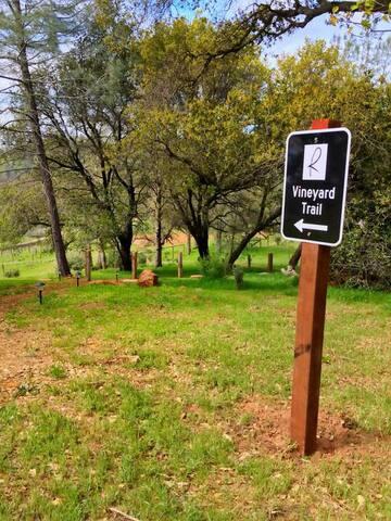 Papillon Cellars - The Vineyard Trail