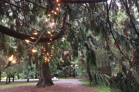 Camping on 14 Acres of Private Old Growth Woods - Olympia