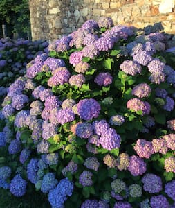 Le Cottage des Hortensias