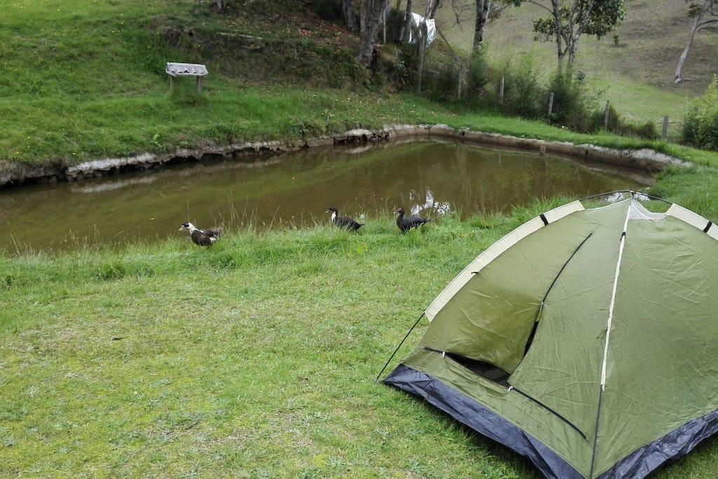 Camping en santa elena