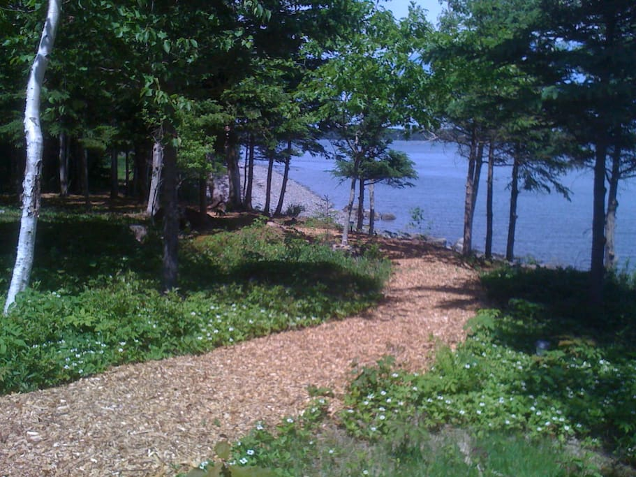 Woodland path to beach