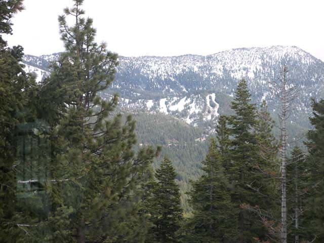 Canyon View of Diamond Peak and Forest