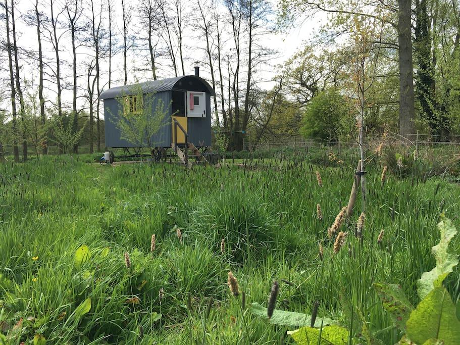 springtime at Fen Lodge