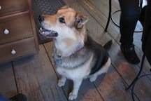 Cindy, our greeter- now passed on