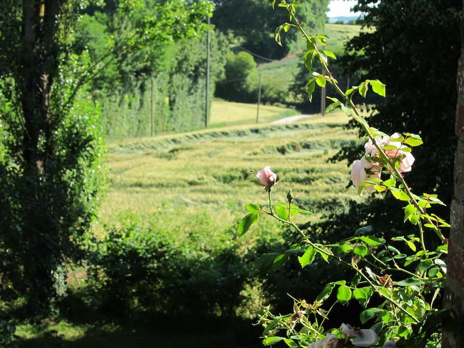 Une maison au milieu des champs