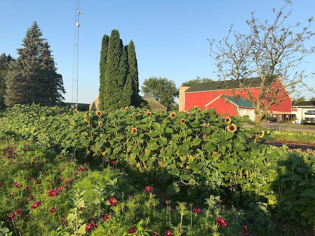 Lavender Rm-Flower Farm-Road America, Ryder, DNC