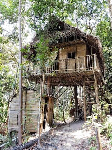 Rainforest Tree House