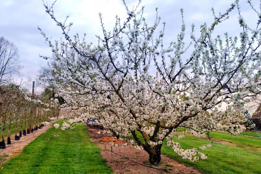 Notre jardin. Our garden