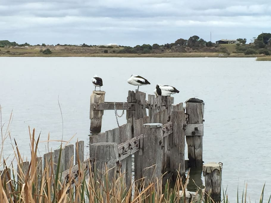 Local Pelicans within 500 m of the home