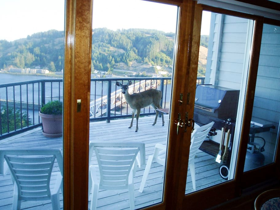 View from the kitchen of deer on the deck.
