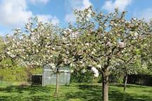 De boomgaard tijdens de bloesemtijd