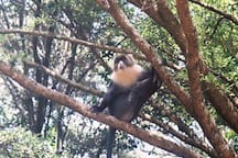 Welcome pose from the visiting monkey