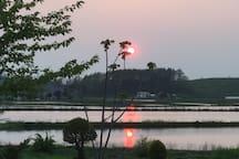 裏庭からの風景 5月25日 scenery at backyard
