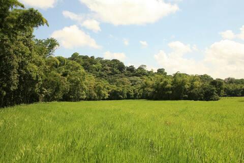 Hacienda Mulatos