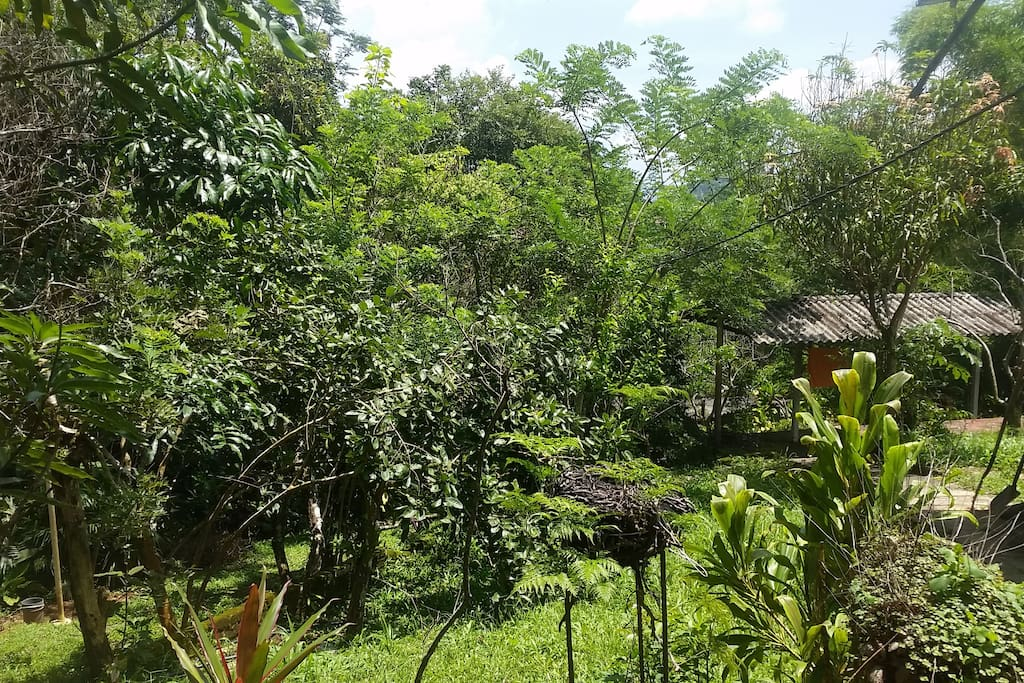 The garden with its fruit trees and birds